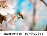 Stock photo bee flying bee on the flower 1074422165