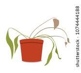 drying home flower in a pot.... | Shutterstock .eps vector #1074444188