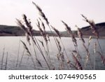 reed in wind with blur...   Shutterstock . vector #1074490565