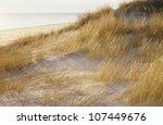 Grass Beside Seashore