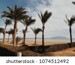 palms on the beach in sharm...   Shutterstock . vector #1074512492