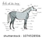 parts of horse. equine anatomy. ... | Shutterstock .eps vector #1074528506