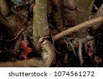 plants have elaborate root...   Shutterstock . vector #1074561272