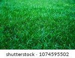 fresh green grass background.... | Shutterstock . vector #1074595502