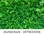 nature green leaves wall... | Shutterstock . vector #1074614246