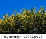 soft  beautiful  fluffy ...   Shutterstock . vector #1074639326