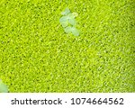 Small photo of Blurred lamna on the surface is a green background