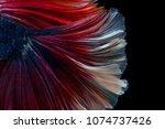 macro the beautiful small siam... | Shutterstock . vector #1074737426