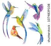 small birds set. hummingbird. | Shutterstock . vector #1074839108