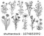 wildflower   bluebell ... | Shutterstock .eps vector #1074853592