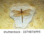 dragonfly fossils in layers... | Shutterstock . vector #1074876995