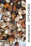 Small photo of Dried Betel nut, Areca catechu, Areca Nut background, selective focus. blurred betel nuts background