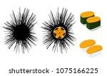 raw urchin and uni sushi... | Shutterstock .eps vector #1075166225