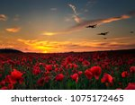 Lest We Forget Poppy Field Wit...