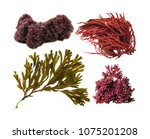 Various Seaweeds Isolated On...
