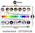 ph scale infographic diagram...   Shutterstock .eps vector #1075204136