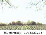 minimal vineyard panorama | Shutterstock . vector #1075231235