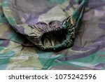 raincoat raincoat isolated on...   Shutterstock . vector #1075242596