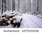 Woodpile In A Winter Forest