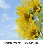 Sunflowers Against A Blue Sky - stock photo