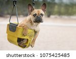 dog sitting in a swing | Shutterstock . vector #1075425485