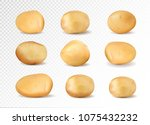 brown earth potato isolated... | Shutterstock .eps vector #1075432232