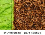 Small photo of Tobacco green leaf texture and tobacco dry leaf cut background. High quality dry cut tobacco on Tobacco green leaf background.