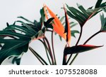 exotic tropical flower...   Shutterstock . vector #1075528088