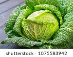 savoy cabbage from organic... | Shutterstock . vector #1075583942