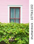 Pink Window Behind Vines