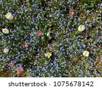 spring colorful flowers | Shutterstock . vector #1075678142