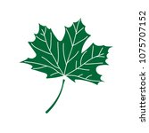 maple leaf icon vector...   Shutterstock .eps vector #1075707152