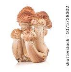 Small photo of Mushrooms honey agarics (Armillaria mellea) isolated on white