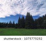 carpatian mountains summer... | Shutterstock . vector #1075775252