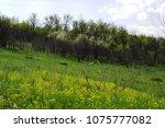 landscape in the spring | Shutterstock . vector #1075777082