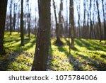 evening forest march landscape. ... | Shutterstock . vector #1075784006