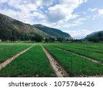 field so good | Shutterstock . vector #1075784426