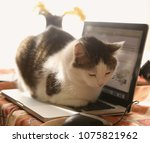 Stock photo cute cat lay resting on laptop keyboard on the table 1075821962