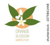 orange blossom flowers with... | Shutterstock .eps vector #1075861448