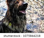 alsatian animal breeds dog... | Shutterstock . vector #1075866218