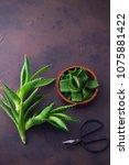 aloe vera on dark background  ...   Shutterstock . vector #1075881422