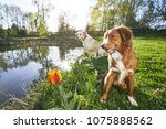two friendly dogs in summer... | Shutterstock . vector #1075888562