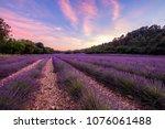 lavender field in summer ... | Shutterstock . vector #1076061488