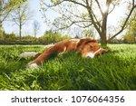 springtime on the garden. cute... | Shutterstock . vector #1076064356