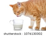 Red Cat Drinking Milk With A...