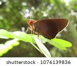 Small photo of Matapa aria, the common redeye, is a butterfly belonging to the family Hesperiidae found in India.