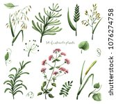 set of watercolor plants on a...   Shutterstock . vector #1076274758
