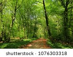 Beautiful pathway in the Teutoburger Wald near Borgholzhausen, Kreis Guetersloh, Westphalia, Natural Preserve Terra vita, Germany