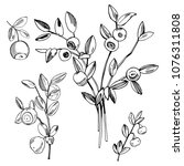 hand drawn forest berry....   Shutterstock .eps vector #1076311808