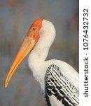 Beautiful Bird Painted Stork